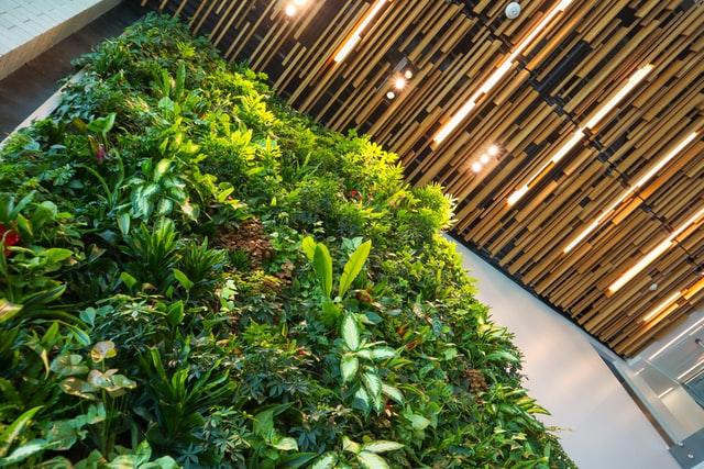 Mur végétal: Et si on utilise la plante pour décorer notre intérieur?